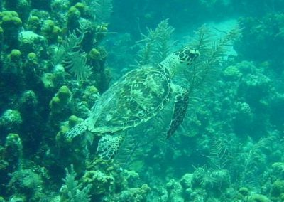 Turtle, St Thomas